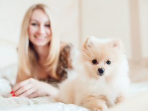 """Divorce Lawyers See Steady Increase in """"Pup-nuptial"""" Agreements"""