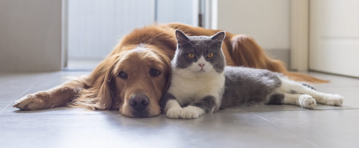 A dog and cat laying together on the floor, for help with who will have custody of your pets with your divorce meet with Divorce Attorney in Michigan.
